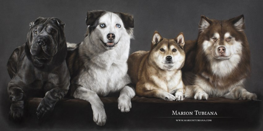Dog portrait paintings by Marion Tubiana